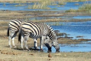 Luxury Botswana Safari Gay Group Trip
