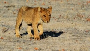 Namibia Adventure Gay Group Trip