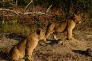 South Africa Gay Group Trip Safari