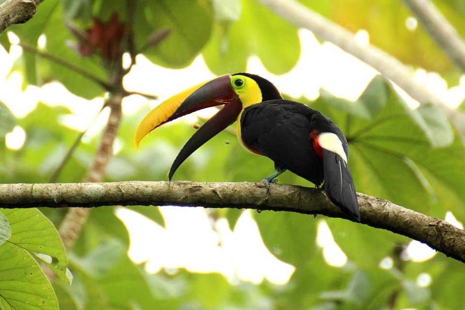 Gay Costa Rica