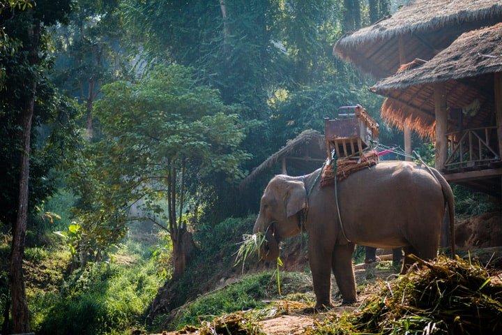 elefant-ridning-nær-chiang-mai