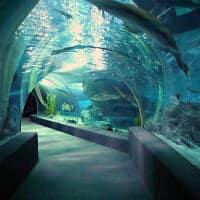 Sea Life Μπανγκόκ Ωκεανός Κόσμος