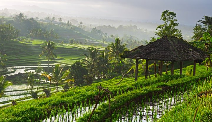 rice-paddy-field-in-bali