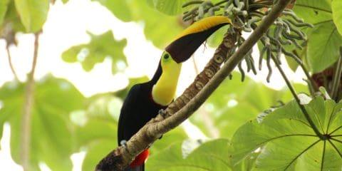 كوستاريكا