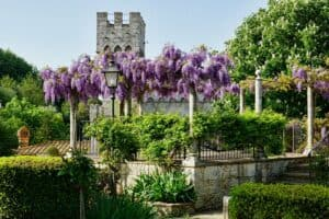 tuscany, garden, flower